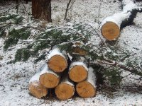 Сообщите о беспорядке в лесу